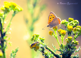 Summer Breeze by TammyPhotography