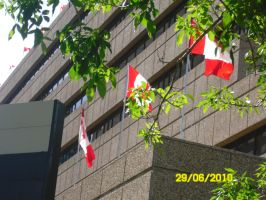 Canadian flags by 95JEH