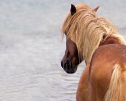 Wild Horse 2179647 by StockProject1