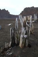 Deception Island wood by CAStock