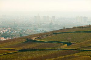 Town and wine by Louisolah