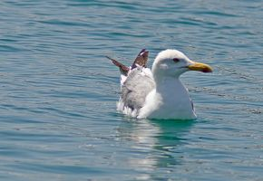 Seagull 2 by agelisgeo