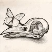 Bird Skull a by sitres