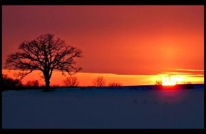 Winter Sunset by ariseandrejoice