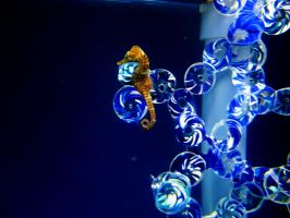 SeaHorse 1 -- Sept 2009 by pricecw-stock