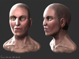 zbrush female head anatomy by liamslackofsurprise