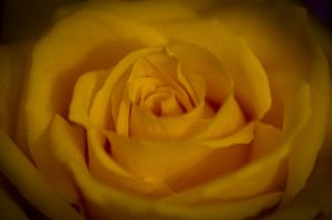 My yellow mellow by Wonderer1000