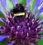 Busy Bee by davecbend