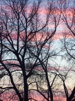 Sunset Tree Silloette by Book-of-Light-Stock