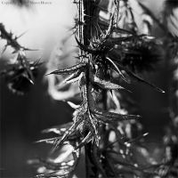 Pins - bw by wroth
