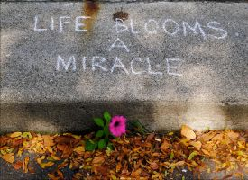 Miracle flower. L1020502. with story by harrietsfriend