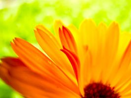 The Unfurling of Petals by ElindielForestStar