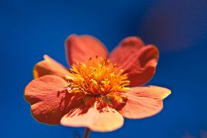 Macro Garden Flowers XV by Witch-Dr-Tim