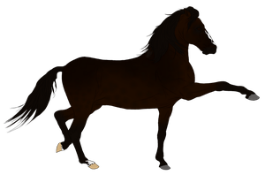 Adalusian Auction Horse 1 by HoofHaven