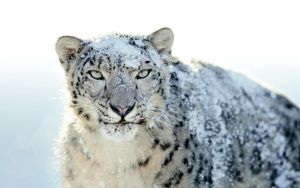 Mac OSX Snow Leopard Wallpaper by xulfikar