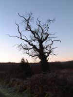 15. Nature - Dead Tree by nexus35-Stock