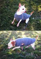Small Dog Sweater - Keeping My Old Girl Warm by 100chihuahuas
