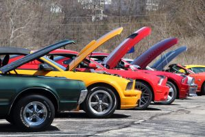 Mustangs by jmasser