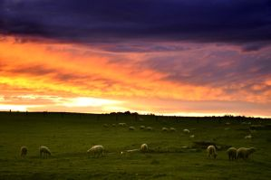 Sheep farm by tomsumartin