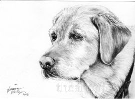 Dog Commission 4 by jucyjesy82