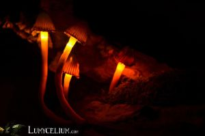 Tourbillon - lighting mushrooms decoration by lumycelium