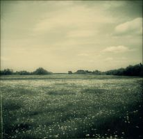 The Plain by earational