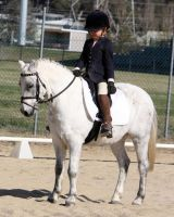 Pony Dressage - Stock - 04 by aussiegal7