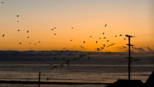 Flock to the Line by DylanStricker