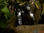 Gorilla in the Midst... by jokerjester-campos