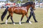 STOCK - Gold Coast show 252 by fillyrox