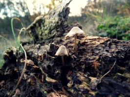 Mushrooms by Bouwland