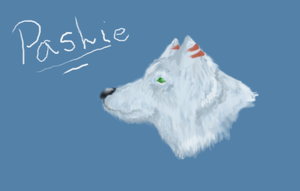 Pashie Profile by shylittleghost