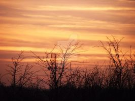 Tree in the Sunset x5 19.01.11 by Dark-Angel15-2010