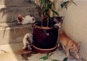 Magic Kitten-Growing Pot ... by pergamjee