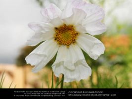 Flower 015 by Lelanie-Stock