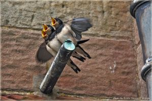 Hungry Birds by brijome