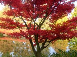 red tree in japanese garden 4 by ingeline-art