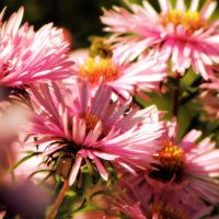 Late summer blooms by krigl