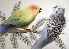 Parakeets by 130Dk