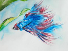 Betta by soybeans