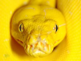 Greent Tree Python 1 by ryanmattes