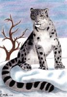 Snow Leopard by Elkenar
