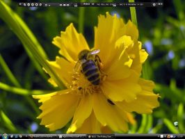 Busy bee desktop by 99-in-the-shade