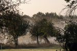 Petite brume matinale by Rayon2lune