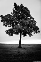 Solitary Tree by Auraomega