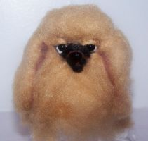 Pekingese close up by clay-dreams