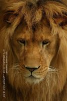 Disappointed by guitarjohnny
