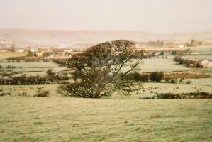 Frosty tree by Spinneyhead