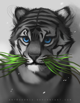 Grass by Akonis