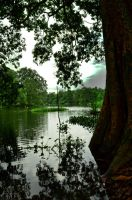Tree And the River by irmans20